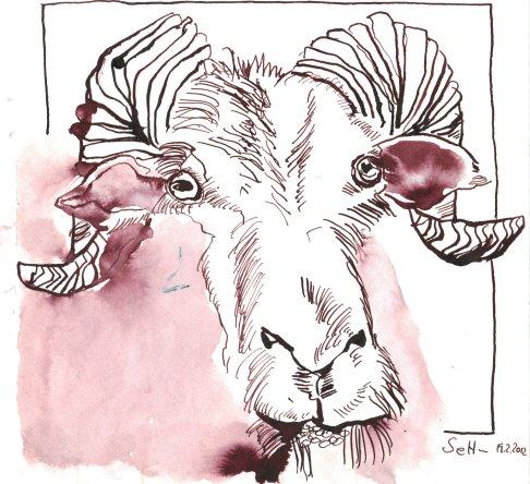 Widder - Zeichnung von Susanne Haun - Tusche auf Bütten - 20 x 20 cm