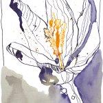Abendkrokus vor meiner Tür 18 x 22 cm - Tusche auf Bütten (c) Zeichnung von Susanne Haun
