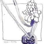Muscari auf meinem Schreibtisch 18 x 22 cm - Tusche auf Bütten (c) Zeichnung von Susanne Haun