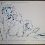 Fresie im Größenvergleich (c) Foto und Zeichnung von Susanne Haun