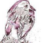 Mandarinente auf Hahnemühle Papier (c) Zeichnung von Susanne Haun