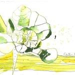 Erstes Grün - Tusche auf Bütten - 17 x 22 cm - Version 2 (c) Zeichnung von Susanne Haun