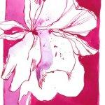 Mandelblüte 17 x 22 cm (c) Zeichnung von Susanne Haun