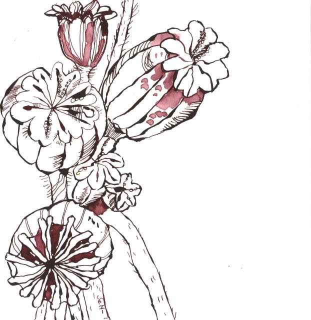 Mohn Ausschnitt aus 23 x 31 cm Tusche auf Bütten (c) Zeichnung von Susanne Haun