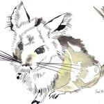 Chinchilla 17 x 22 cm Tusche auf Bütten (c) Zeichnung von Susanne Haun