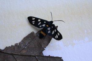 Insekt mit Blatt auf meinem Aquarellblock (c) Foto von Susanne Haun