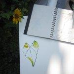 Der Kontrast zwischen Sonnenschein und Schatten ist ungünstig fürs Zeichnen (c) Foto von Susanne Haun