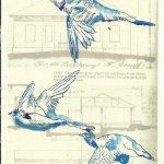 Heimat Lichterfelde - Der Traum vom Fliegen Blatt 52 (c) Überzeichnung von Susanne Haun