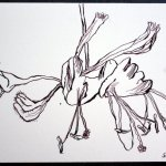 Blüte Version 217 x 22 cm Tusche auf Bütten (c) Zeichnung von Susanne Haun