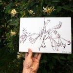 Die Blüte passt (c) Foto und Zeichnung von Susanne Haun
