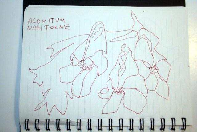 Pflanzen noch aus Kopenhagen (c) Zeichnung von Susanne Haun