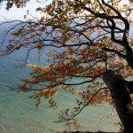 Die Blätter sind schön herbstlich (c) Foto von Susanne Haun