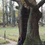 Die alte Marie - eine Eiche (c) Foto von A.Haun