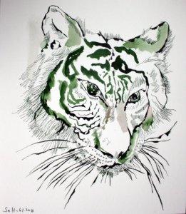 Tiger 30 x 26 cm Tusche auf Bütten (c) Zeichnung von Susanne Haun