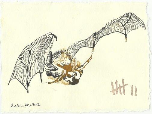 Blatt 75 Wie eine riesige Fledermaus - Ihre Fratzen (c) Zeichnung von Susanne