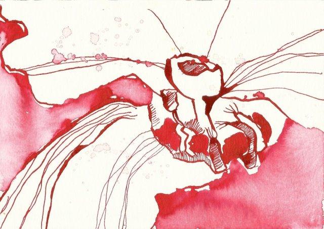 Blatt 4 Primel 12 x 17 cm (c) Zeichnung von Susanne Haun