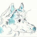 Portrait Husky Version 1 (c) Zeichnung von Susanne Haun