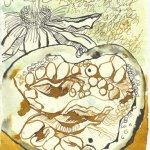 Blatt 79 Das Fruchtfleisch wölbt sich zu liebenden Lippen (c) Zeichnung von Susanne Haun