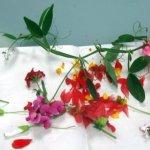 Gesammelte Blumen (c) Foto von Susanne Haun