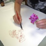 Ich beginne das Zeichnen mit den Wicken (c) Foto von Cordula