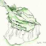 Angebissener Pfirsisch (c) Zeichnung von Susanne Haun