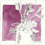 Sommernachhall 20 x 20 cm (c) Zeichnung von Susanne Haun