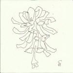 Zapfen Version 5 (c) Zeichnung von Susanne Haun