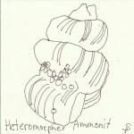 Ammonit Version 2 (c) Zeichnung von Susanne Haun