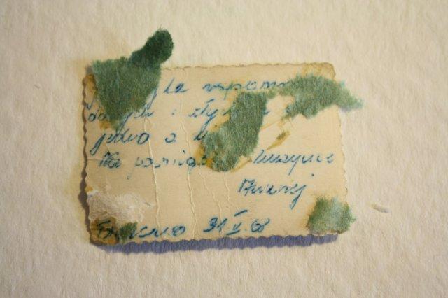 Identifikation (c) Foto von Susanne Haun