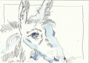 Esel der Weihnacht 2014 (c) Zeichnung von Susanne Haun