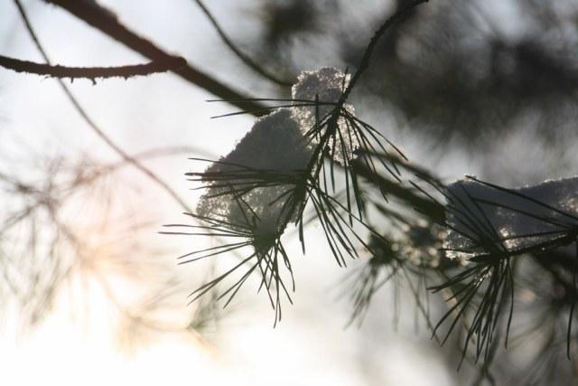 Winterwald (c) Foto von Susanne Haun