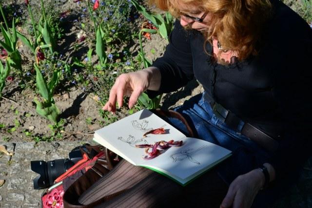 Zeichnen von verblühten Tulpen - Susanne Haun (c) Foto von M.Fanke