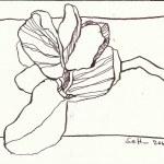Rosa Fruehlingsblueten (c) Zeichnung von Susanne Haun