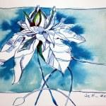 Passionsblume - 17 x 22 cm - Tusche auf Bütten (c) Zeichnung von Susanne Haun