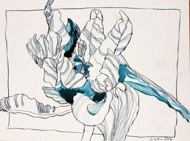 Blaue sehr aufgeblühte Tulpen (c) Zeichnugn von Susanne Haun