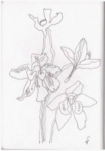Kleine lila Blumen (c) Zeichnung von Susanne Haun