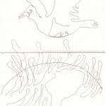 Eiswelten - Fulmur - Sturmvogel - Version 1 (c) Zeichnung von Susanne Haun