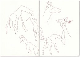 Im Zoo - Giraffen (c) Zeichnung von Susanne Haun
