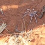 Aufgeschreckt kommt die Spinne aus ihrem Loch (c) Foto von Susanne Haun