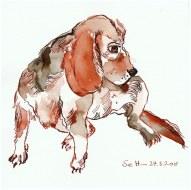 Allzeit bereit - der Beagle - Version 1 -21 x 21 cm - Tusche auf Hahnemühle quattro (c) Zeichnung von Susanne Haun