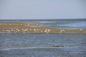 Walvis Bay - Strandpromenade - Flamingos (c) Foto von Susanne Haun