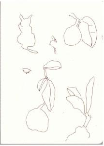 Zitronen auf dem Campingplatz (c) Zeichnung von Susanne Haun