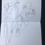Lila Iris aus Papas Garten (c) Zeichnung von Susanne Haun