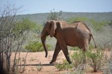 Elefant im Etosha Nationalpark (c) Foto von M.Fanke