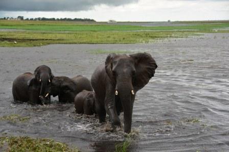 18 Elefanten beim Wasser im Chobe Nationalpark in Botswana (c) Foto von M. Fanke
