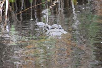 Krokodil im Okavango Delta Botswana (c) Foto von Susanne Haun