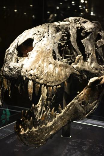 3 Tristan, Museum für Naturkunde, Foto von M.Fanke