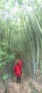 24 Impressionen von der Wanderung rund um Villa Baldini, im Bambuswald (c) Foto von M.Fanke