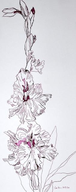 Gladiolen recken sich zum Himmel, 50 x 20 cm, Zeichnung von Susanne Haun (c) VG Bild-Kunst, Bonn 2020