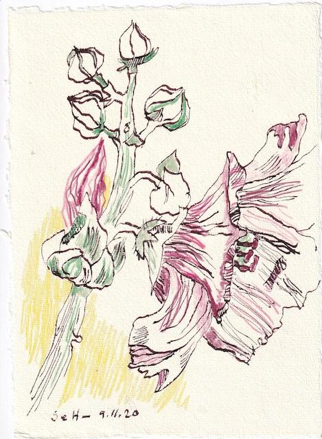 Tagebucheintrag 09.11.2020, Der Hibiskus träumt von Mama und Papa, 20 x 15 cm, Tinte und Buntstift auf Silberburg Büttenpapier, Zeichnung von Susanne Haun (c) VG Bild-Kunst, Bonn 2020